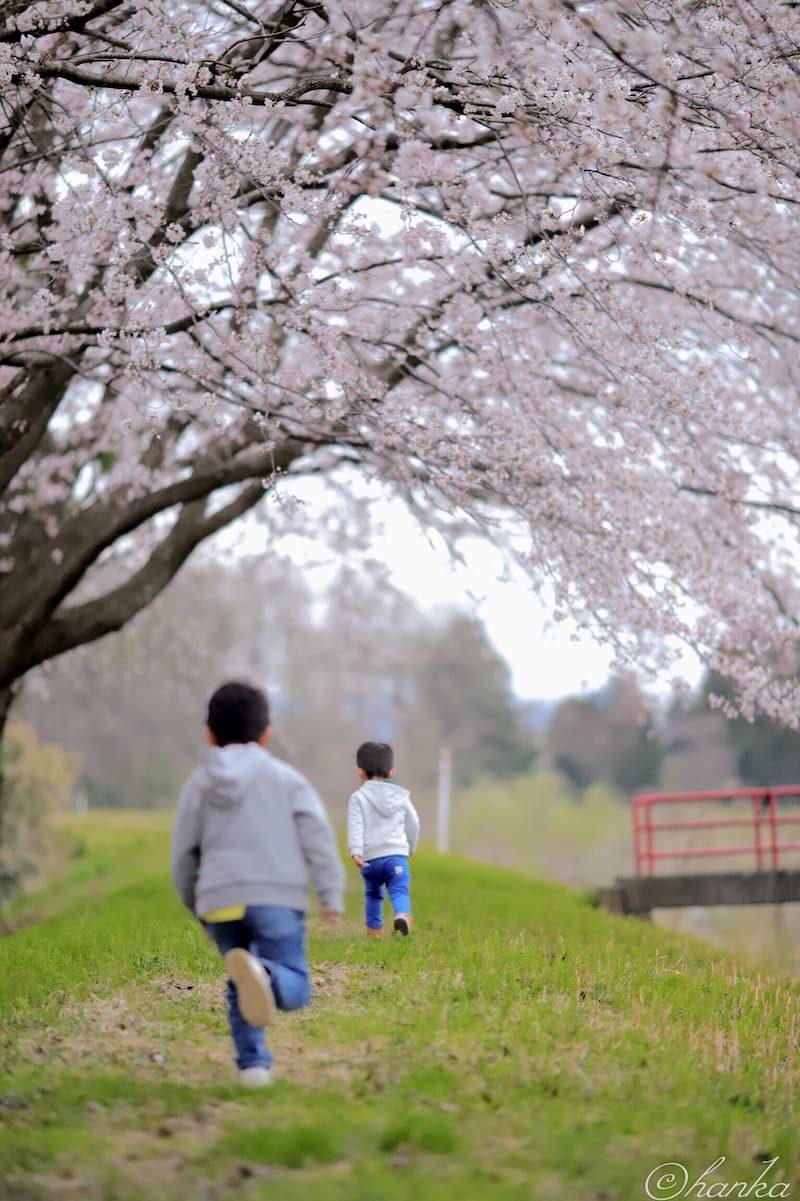 桜,一眼レフ,6D2