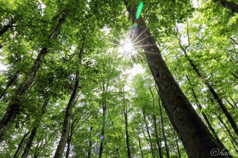新緑,光芒