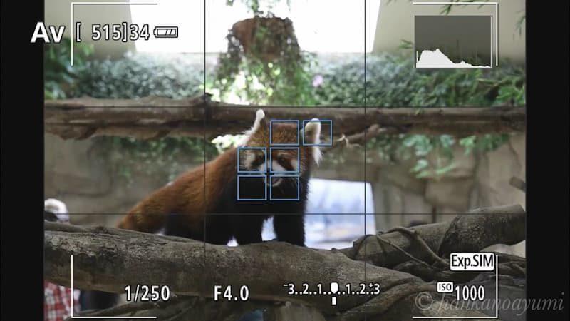 テックTMREC-FHDでEOS RPの撮影画面キャプチャー